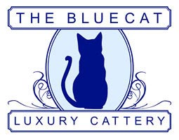 Bluecat Luxury Cattery, Clophill, bedfordshire